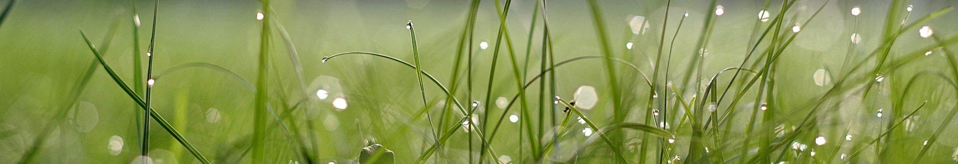 grass-2478926_1920