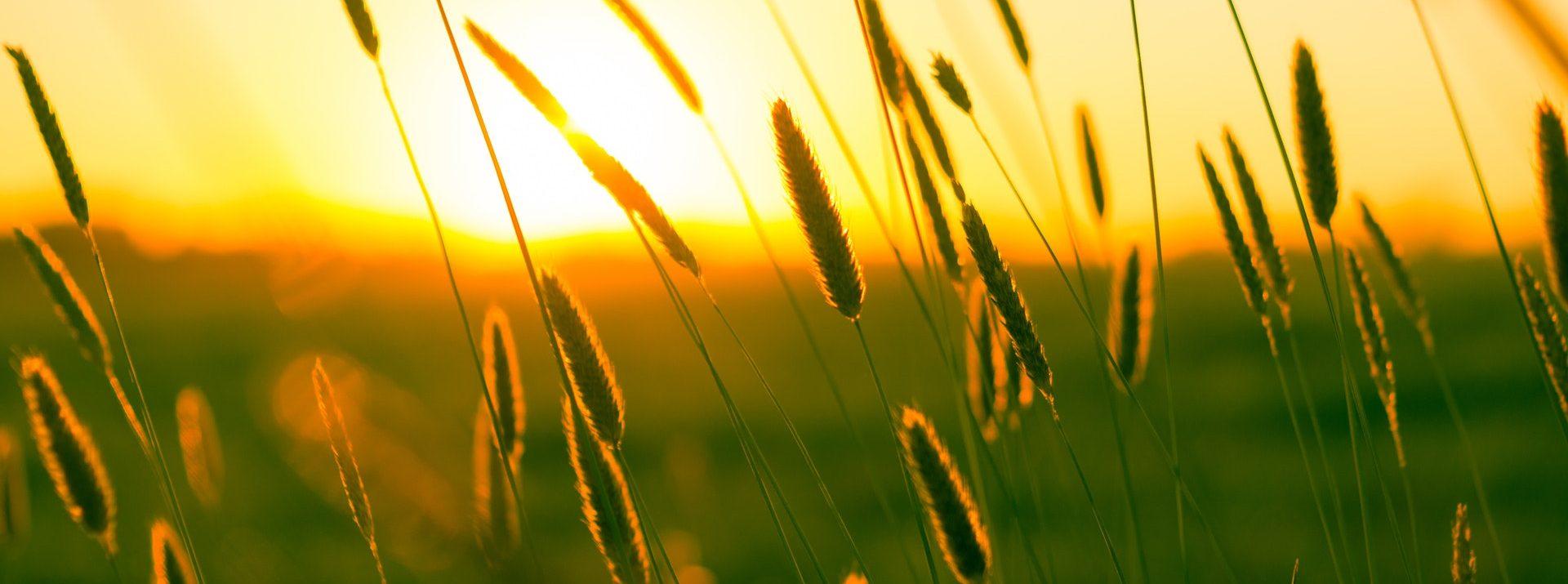 summer-sun-yellow-photography (1)